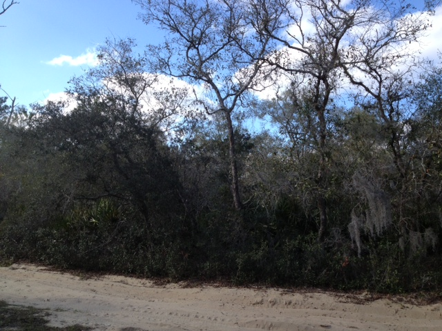 Sell vacant lot quick Florida. We pay back taxes on your land. Vacant lot Cape Coral, Interlachen, Ocala.
